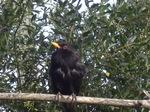 Vogel vor Kirschbaum